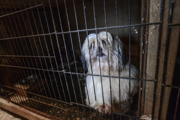 A dog in a puppy mill. Canada, 2015.